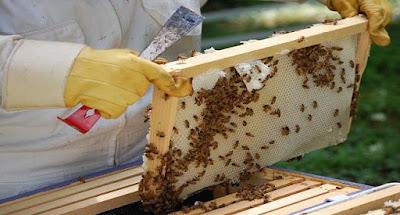Π.Ε.ΠΙΕΡΙΑΣ:Ενημέρωση Μελισσοκόμων