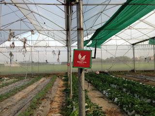 Hệ thống quan trắc môi trường nông nghiệp Nextfarm