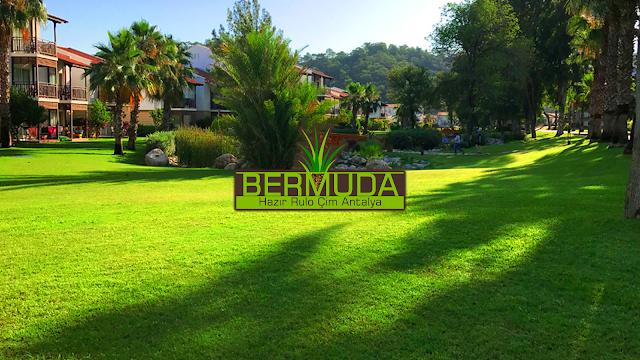 DOĞAL ÇİMEN UYGULAMALARI ANTALYA Bermuda