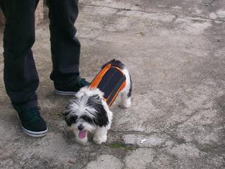 colete para coluna de cães