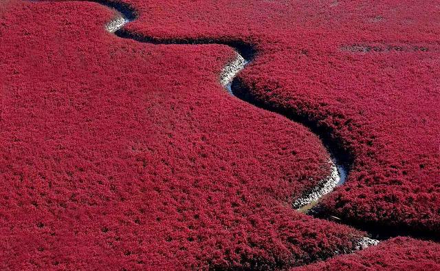 Praia Vermelha - Panjin – China