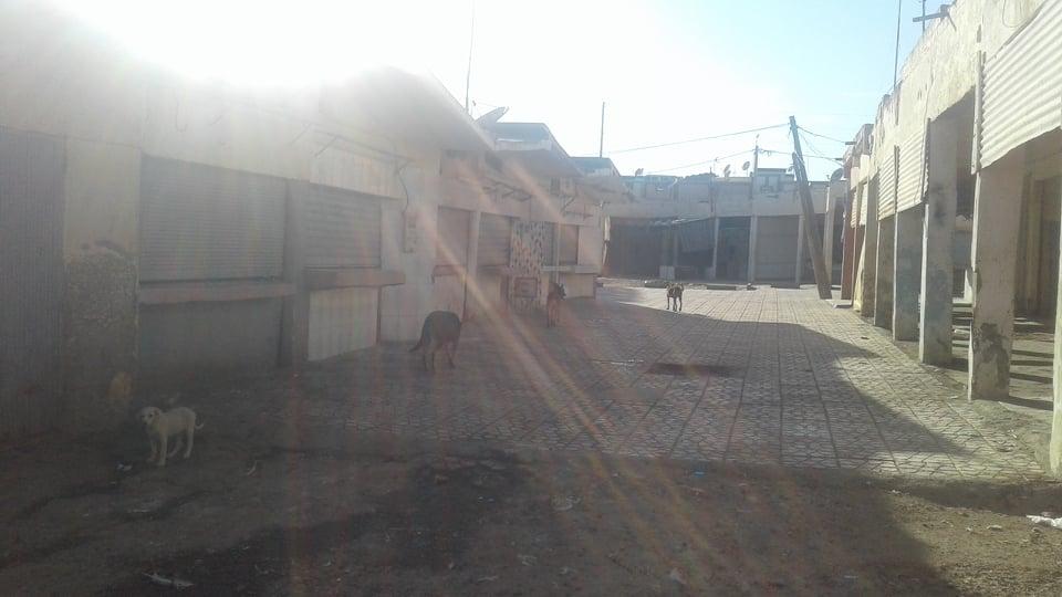 الكلاب المسعورة تشكل خطورة على مواطنين  بمركز تجاري  حي السعادة بمدينة حطان اقليم خريبكة و لا احد يعير اهتمام لخطورة الوضع