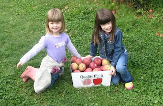 Best Places For Apple Picking in the Chester County Area