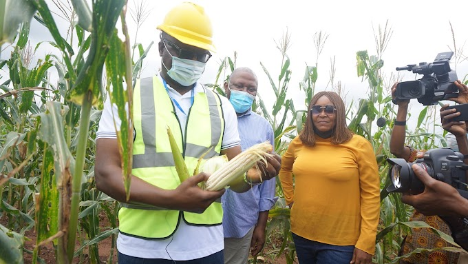 Improved Agricultural Revenue Critical To Sustainable Economic Growth - Okojie