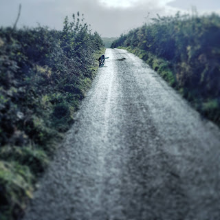 Dog walks up a country lane, sun is shining after a rain storm