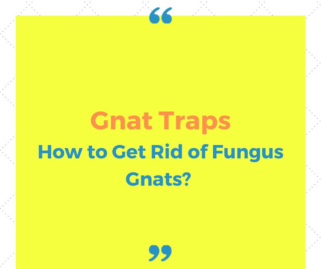 Gnat trap - how to get rid fungus gnats in and out of house