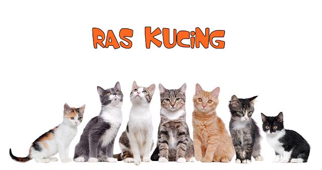 Ras Kucing Didunia