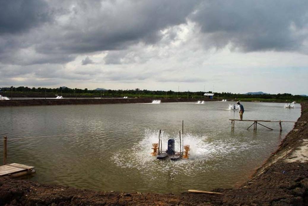 Shrimp Pond Waste Management ~ AQT info