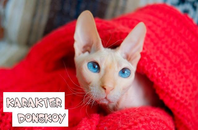 Karakter Kucing Donskoy