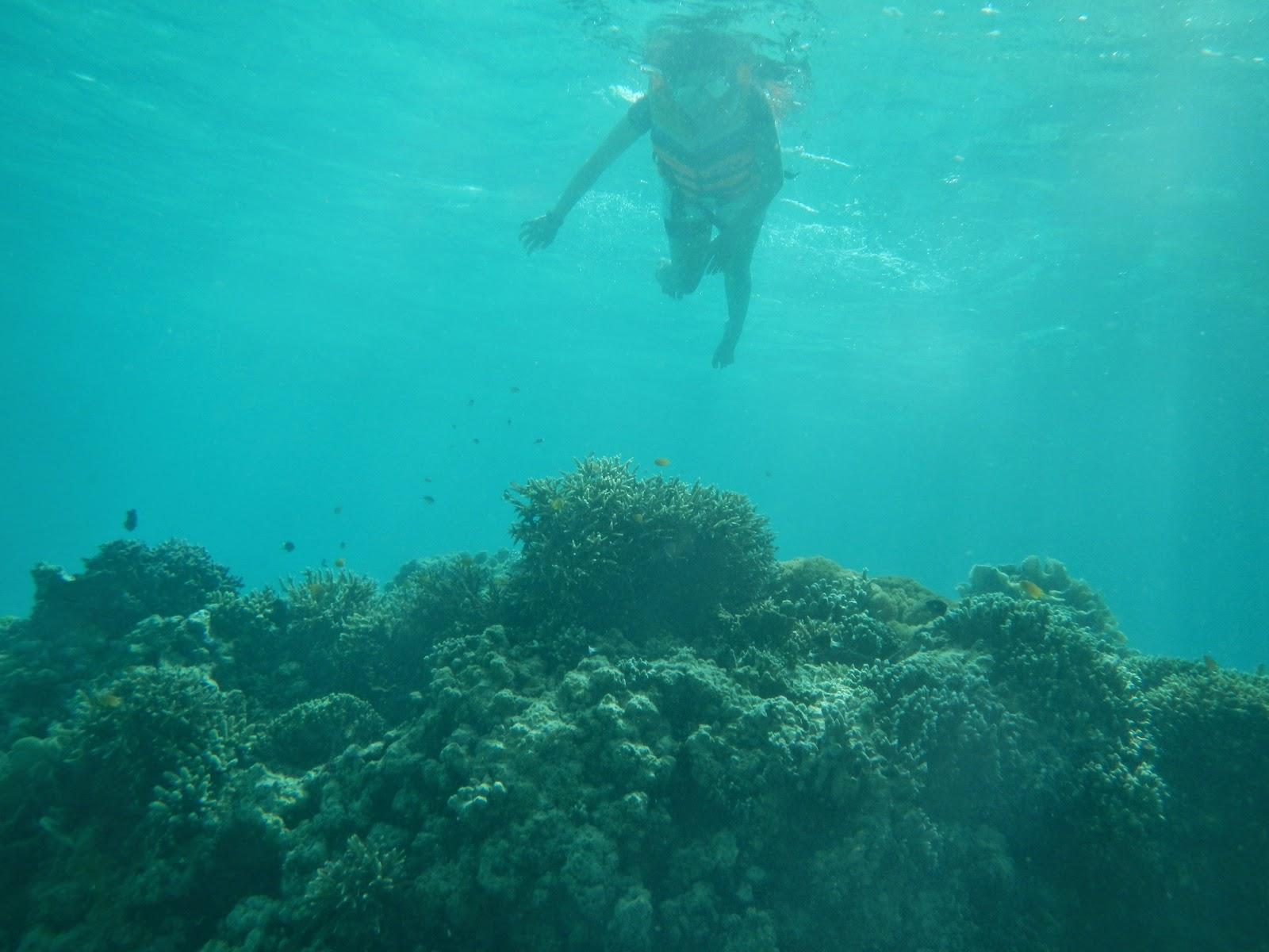 Terumbu Karang di Pulau Derawan