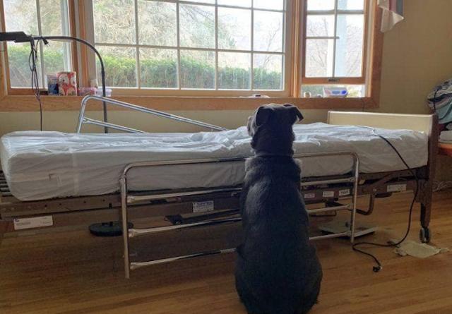 Преданный пес ждал хозяина у больничной койки, не понимая, что того уже нет в живых