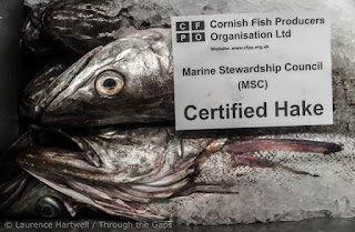 Through the Gaps! - Newlyn Fishing News: Fresh #FishyFriday in ...