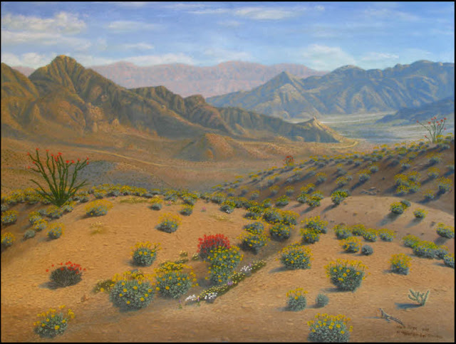 California,desert,Palm Desert,Deep Canyon.Boyd Research Center,mountains,ocotillo,brittlebush,wash,washes,sand,gravel,lizard,zebra tailed lizard,flowers,wildflowers