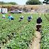 Diputado Matta ingresa proyecto para incluir a pequeños agricultores en bono de alivio a pymes