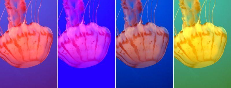 Bioluminous-leuchtende-Tiefseewesen-Fotos-Monterey-Aquarium