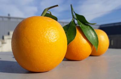 ماهي فائدة البرتقال للجسم - للبشرة - للمعدة - للاسنان - للحامل