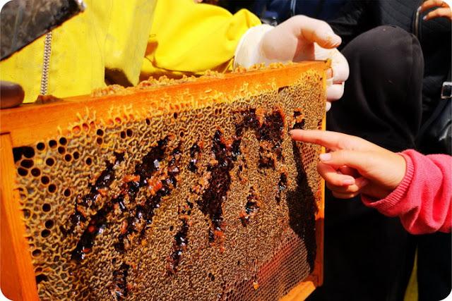 storie di api scuola infanzia