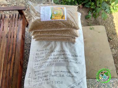 Benih pesana ARIFIN Lamsel, Lampung.  (Sebelum Packing)