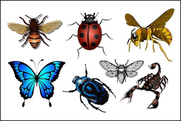 أسماء الحشرات بالفرنسية