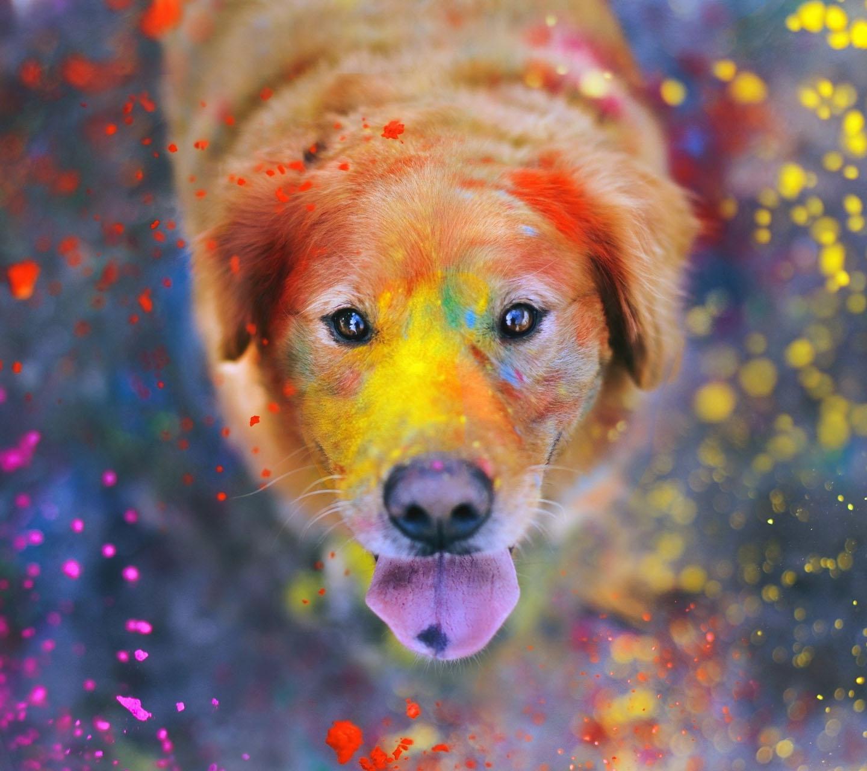 colorful dog samsung galaxy s3 wallpaper