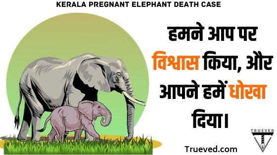 Kerala pregnant elephant death news in hindi - trueved