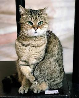 Gli Kucing Hagia Sophia Meninggal