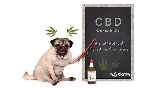 Why Use CBD Oil Pet Products: eAskme