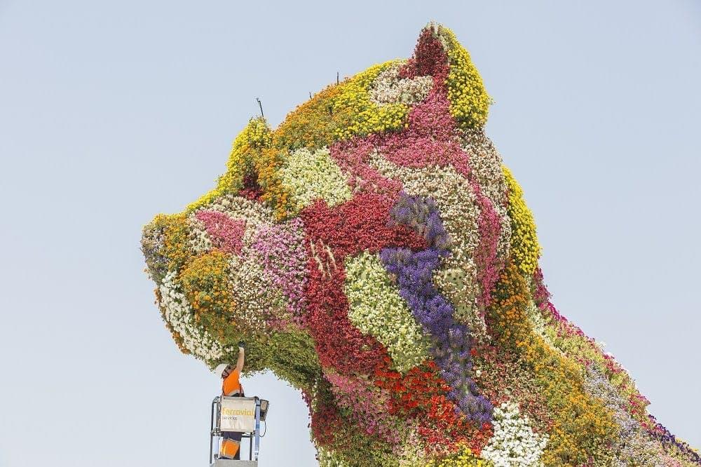 Mantenimiento de Puppy, el perro de flores que custodia el Museo Guggenheim de Bilbao