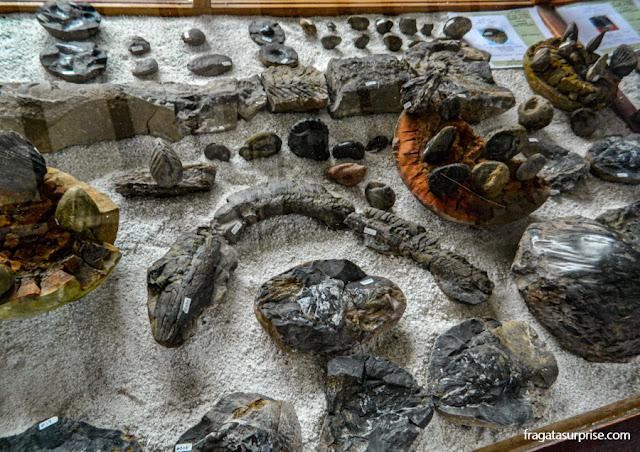 Museu El Fosil, Villa de Leyva, Colômbia