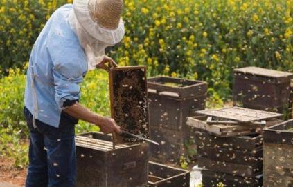 Η Κομισιόν απαγόρευσε άλλο ένα εντομοκτόνο επιβλαβές για τις μέλισσες