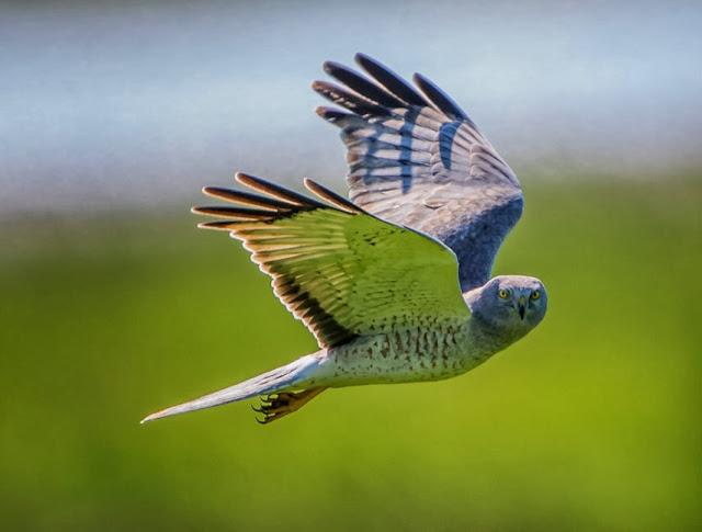 Bird in Sunny Sky
