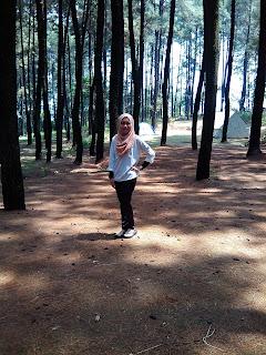 hutan-pinus-gunung-pancar