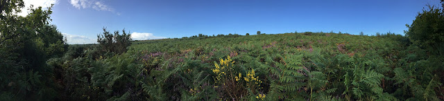 View from a path on the Ashdown Forest, 31 August 2017.