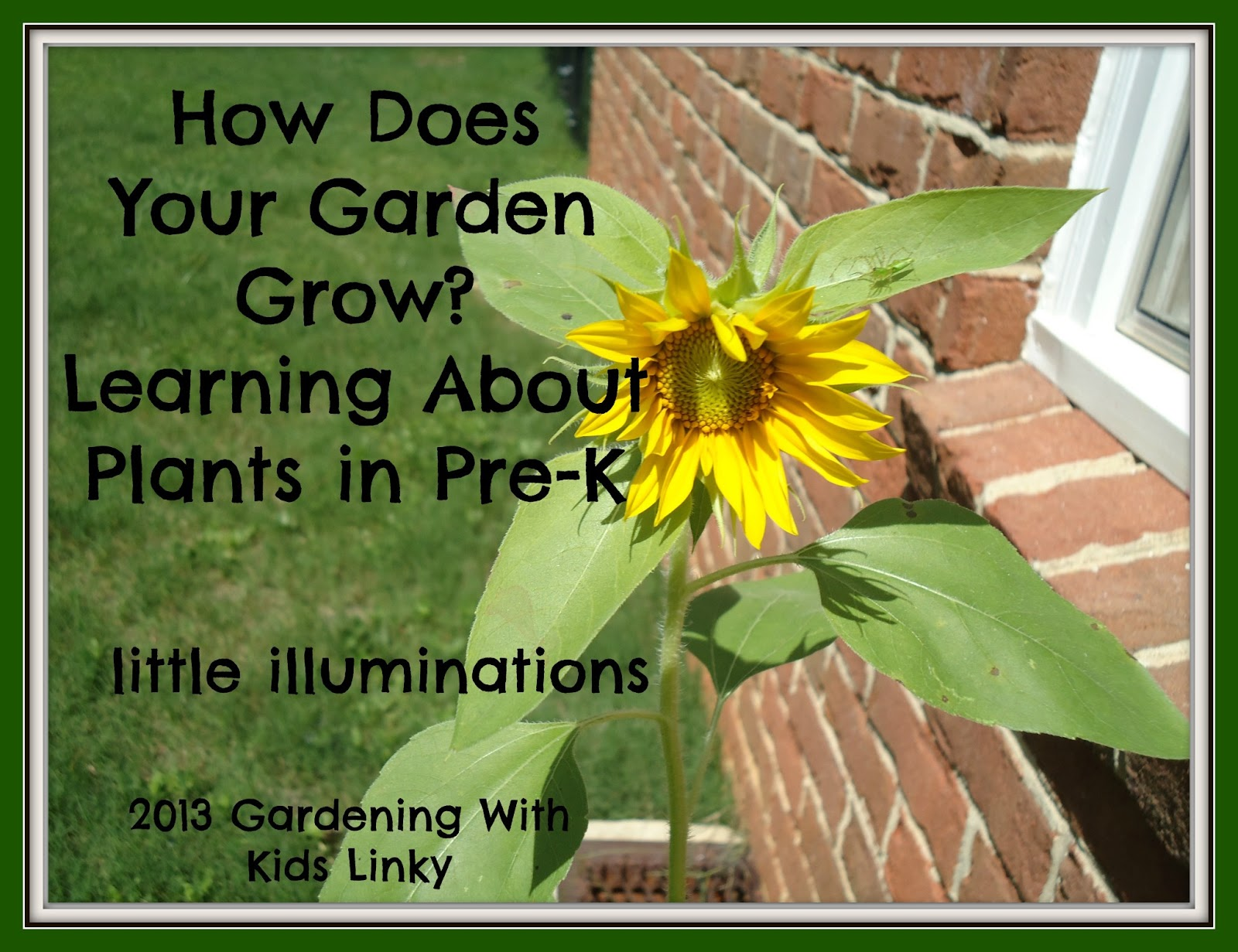 Little Illuminations How Does Your Garden Grow Learning