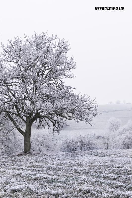 Baum mit Schnee im Winter