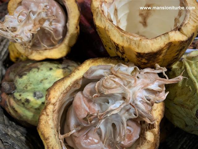 Fruta del Árbol del Cacao