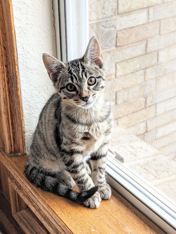 Little Joe the kitten by Heidi Staples at Fabric Mutt