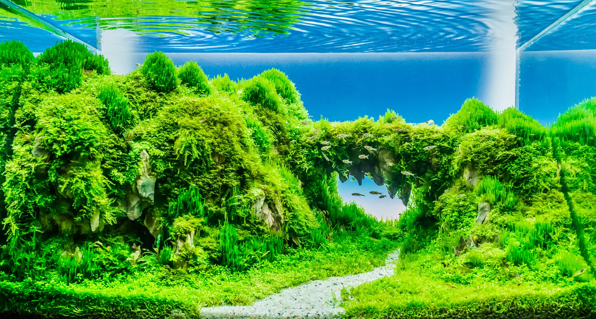 How To Make Aquascape The Simplest Way Fish Hobbyist