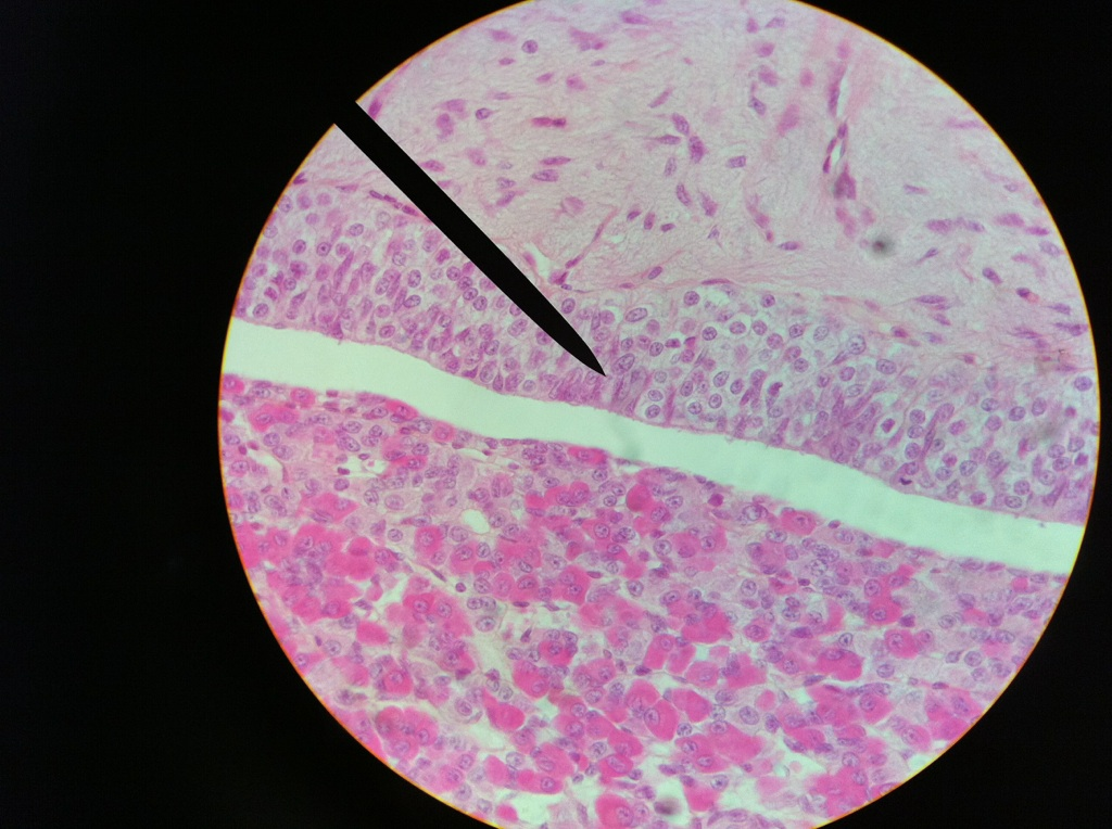 Anatomy120  Slides  Endocrine System
