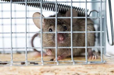 Mampu Mengeluarkan Ultrasonic, Yuk Kenali Alat Perangkap Tikus Canggih Berikut