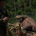 Terjerat Kawat Listrik, Gajah Liar Mati Mengenaskan