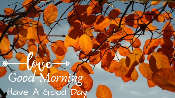 fantastic leaf good morning images