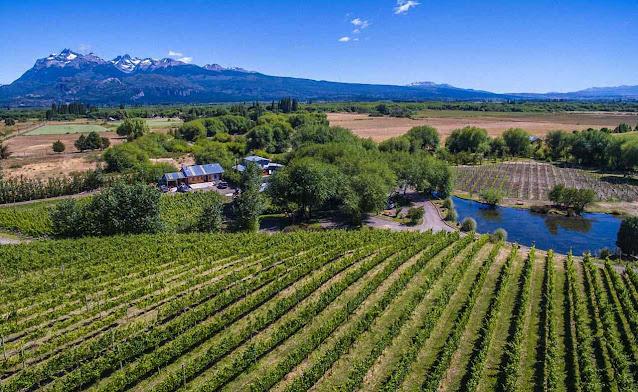 Produzir vinho na Patagônia parecia impossível. Foi só questão de se adaptar