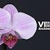 VI Exposição de Orquídeas acontece no feriadão de Independência em Anchieta SC