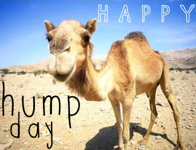 Hump Day Pictures