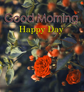 New Good Morning 4k Full HD Images Download For Daily%2B57