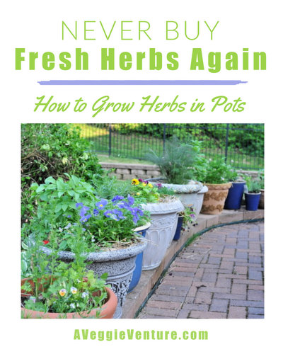 Never Buy Fresh Herbs Again, another budget challenge ♥ AVeggieVenture.com. How to grow a few favorite fresh herbs at home, the pots, the soil, the planting, everything you need to know.