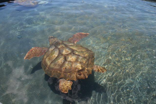 Meeresschildkröten Aufzuchtstation Fuerteventura 03