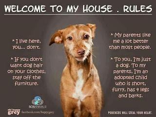 cães da casa