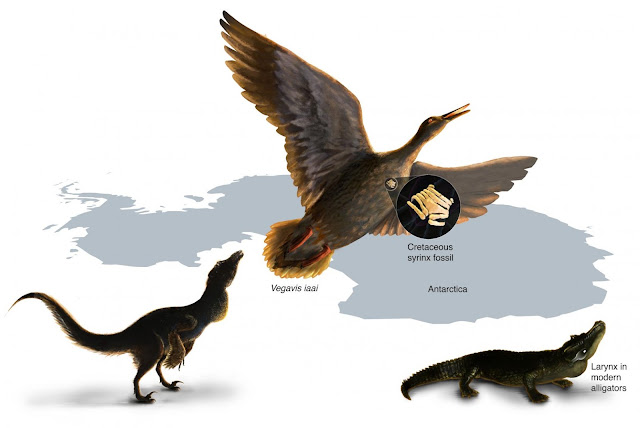 Oldest known squawk box suggests dinosaurs likely did not sing